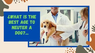 🐕 ¿What Is The Best Age To Neuter a Dog? 🐕