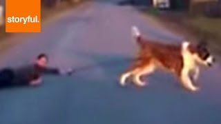 Big Dog Drags Little Kid Across The Street (Storyful, Dogs)