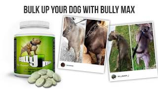 Bully Max Muscle Builder For Dogs (#1-rated brand)