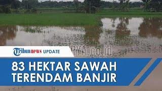 83 Hektar Sawah Terendam Banjir, Ternyata Tanah Tak Berasuransi dan Terancam Tidak Dapat Ganti Rugi