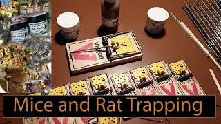 Best bait and traps for rodents (mice/rats).