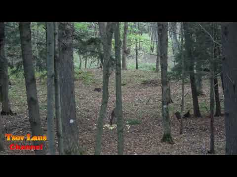 Cross Bow Hunting At Wisconsin Sept  30, 2017