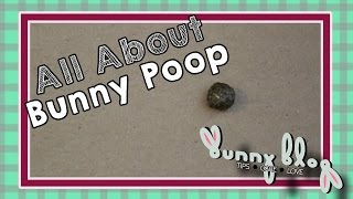 All About Bunny Poop!    Bunny Blog