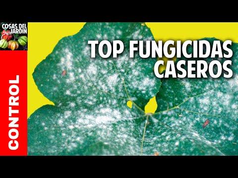 Como se ve el hongo en el pie en los dedos las uñas