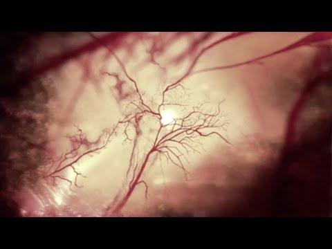 Behandlung von Hypertonie pchelouzhalivaniya