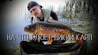 Рыбалка ловить карпа на диком пруду