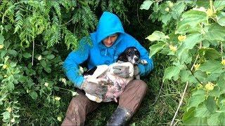 Top 5 Rescue Videos - over 15 million views