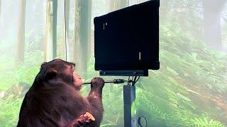 Teknoloji Haftası: Małpy cierpią grając w Ponga