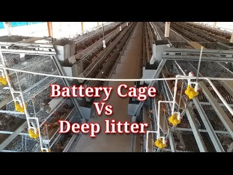 , title : 'Battery Cage System Verses Deep Litter System. I Poultry farming in Kenya