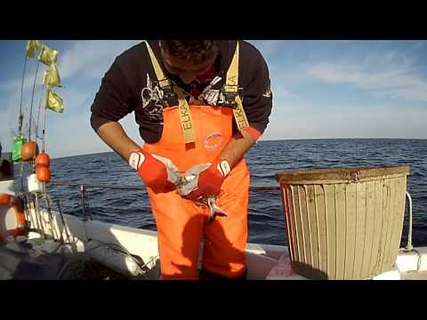 Padrone di gioco da pesca
