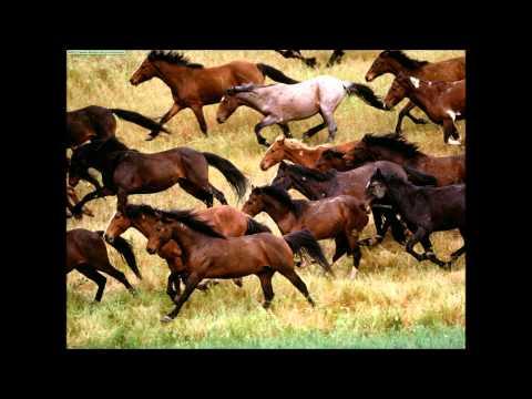 Willie Nelson & The Nelson Family  -  Wild Horses