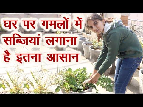 घर पर गमलों में ऐसे उगा सकते हैं ऑर्गेनिक सब्जियां, Kitchen Gardening in pots | Rooftop Gardening