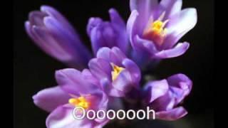 Duffy - Distant Dreamer Lyrics & Photos On Screen