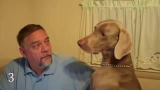 🐶 10 Best Hunting Dog Breeds 🦆🐕🐩