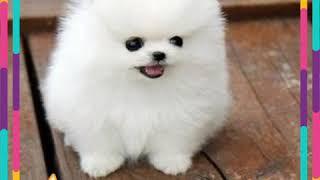 Wallpapers dogs . Картинки милых собак . Картинки всех видов собак