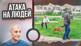 Смотреть онлайн Как отучить бойцовскую собаку бросаться на людей