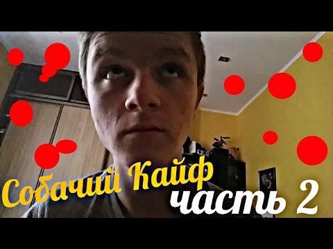 , title : 'Собачий Кайф-Часть 2.'
