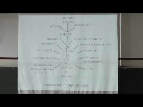 Асеев В. В. - Биохимия - Азотистые основания