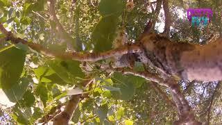 Stuck On Tree | FPV Drone