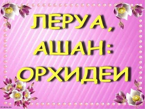 """ПРЕКРАСНЫЕ завозы ОРХИДЕЙ:Леруа,АШАН,29.01.21,ТЦ """"Космопорт"""",Самара."""
