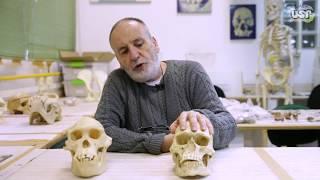 A Saga da Humanidade - Minicurso em 11 aulas, com o professor Walter Neves.
