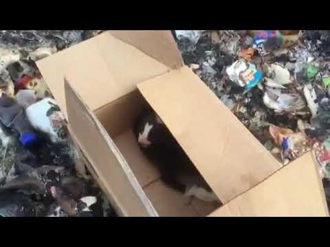 В Якутии щенков выбрасывают на свалки, обрекая на мучительную смерть
