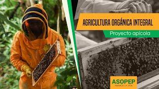 Agricultura orgánica integral: proyecto apícola