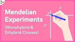 Genetics - Mendelian Experiments - Monohybrid And Dihybrid Crosses - Lesson 3