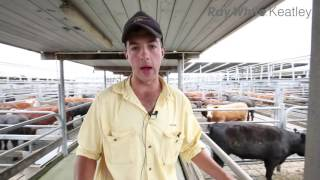 Mount Gambier Cattle Market Report - 30th November 2016