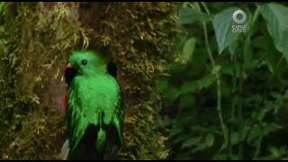Especiales Noticias - La fauna. Un tesoro amenazado