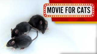 MOVIE FOR CATS - 🐭 BLACK RATS 1 HOUR VERSION (ENTERTAINMENT VIDEOS FOR CATS TO WATCH)