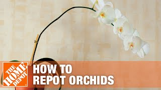How to Repot Orchids | The Home Depot