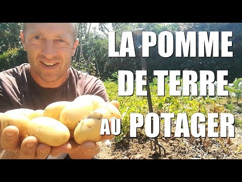 , title : 'La POMME DE TERRE au potager