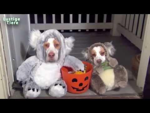 Lustige Hunde und Katzen tragen Halloween-Kostüme Compilation 2015