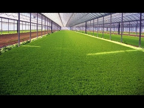 Выращивание зелени в теплице как бизнес идея / Миллион с 6 соток земли