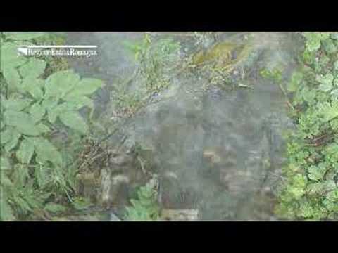Parassiti di un pino ordinario