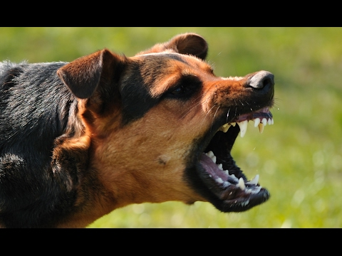 What To Do If You're Attacked By A Dog, According To A Former Navy SEAL