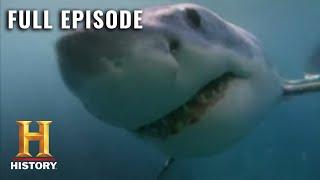 MonsterQuest: TERRIFYING 60 FOOT SHARK - Full Episode (S3, E7) | History