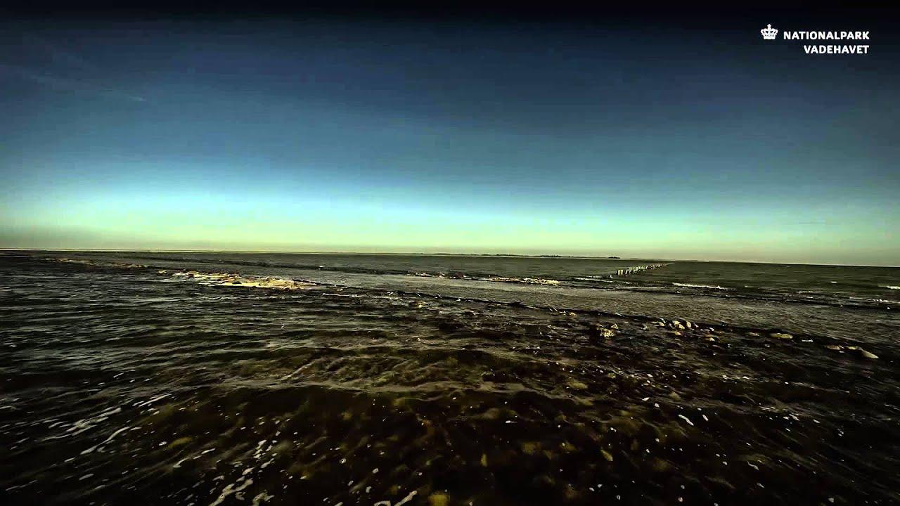 Mandø og Låningsvejen – Nationalpark Vadehavet