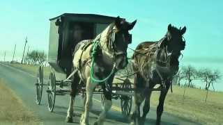 OLD ORDER AMISH COMMUNITY -  BEEVILLE, TX