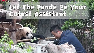 Let The Panda Be Your Cutest Assistant | iPanda