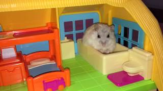 🐹💕 Tiny Hamsters In Their Tiny Mansion - Cute Animal Video