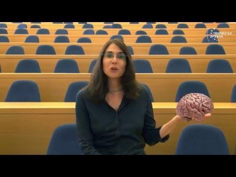 """ד""""ר נאוה לויט בן נון: מהן רשתות מוחיות ולמה חשוב שנבין אותן?"""