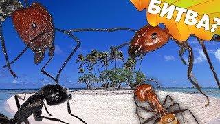 Разные виды на острове! Будет ли битва муравьёв???