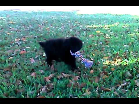 Puppy playing in the yard