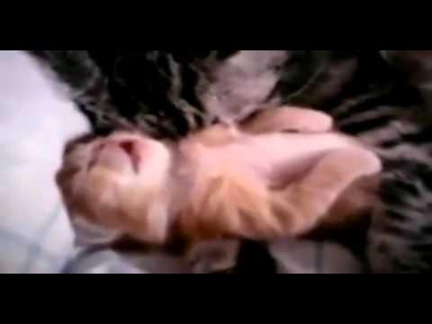 Das Menü für das Kind mit atopitscheskim von der Hautentzündung
