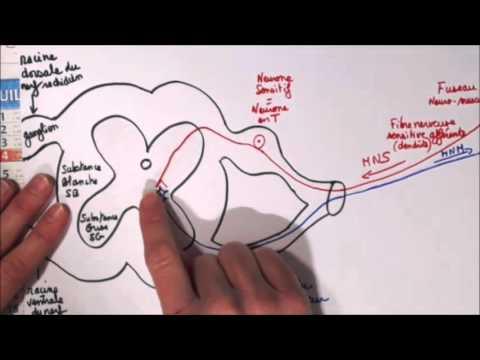 Lincontinence durine chez les femmes de lexercice pour le renforcement des muscles
