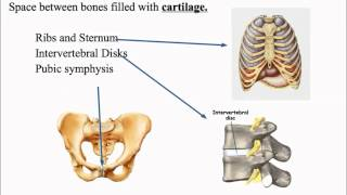 Articulation And Classifications Of Articulations