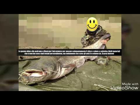Scaricare giochi per landroide su pesca