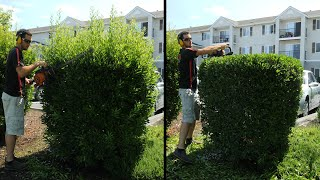 Hedge Trimming OVERGROWN Shrubs! - RSWAL Ep. 50